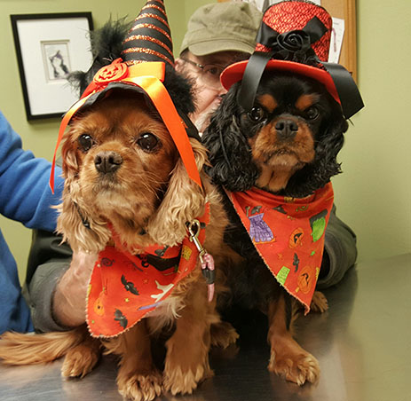 halloween health for pets